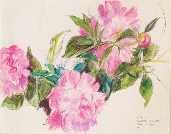 martha-bulloch%22-chinese-peonies-web