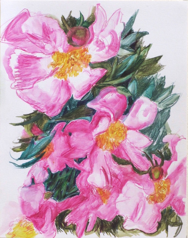 single-petal-deep-pink-peonies-web