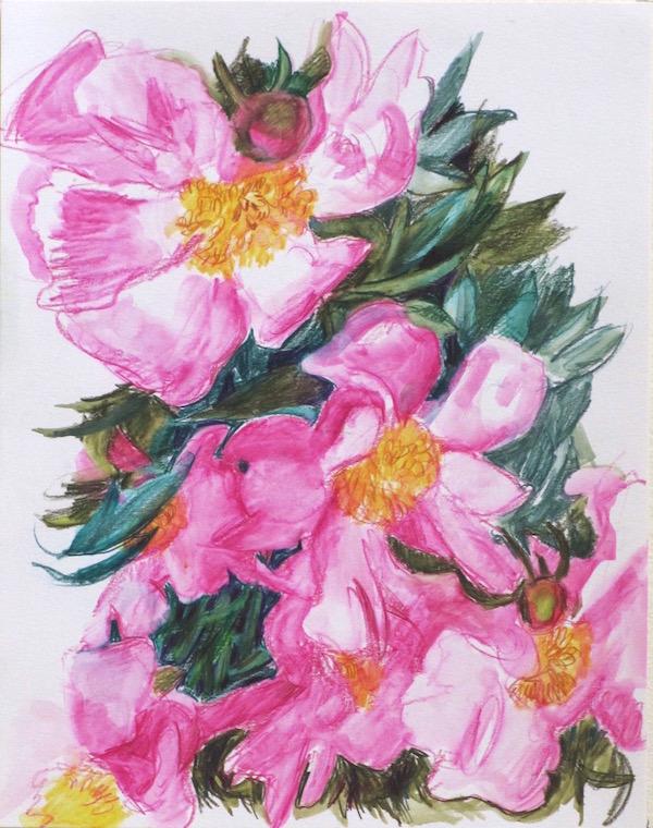 single-petal-deep-pink-peonies-web