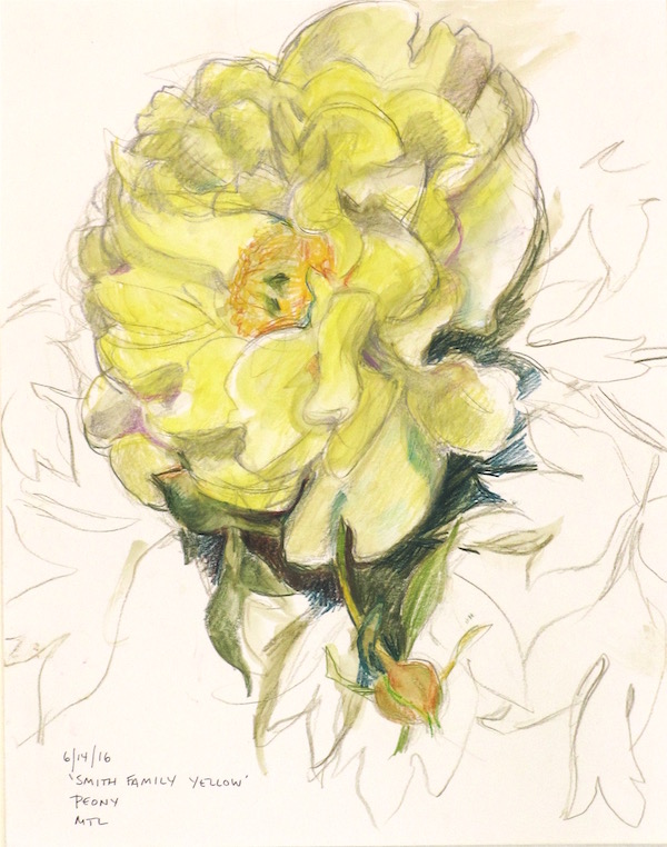 smith-family-yellow-peony-web