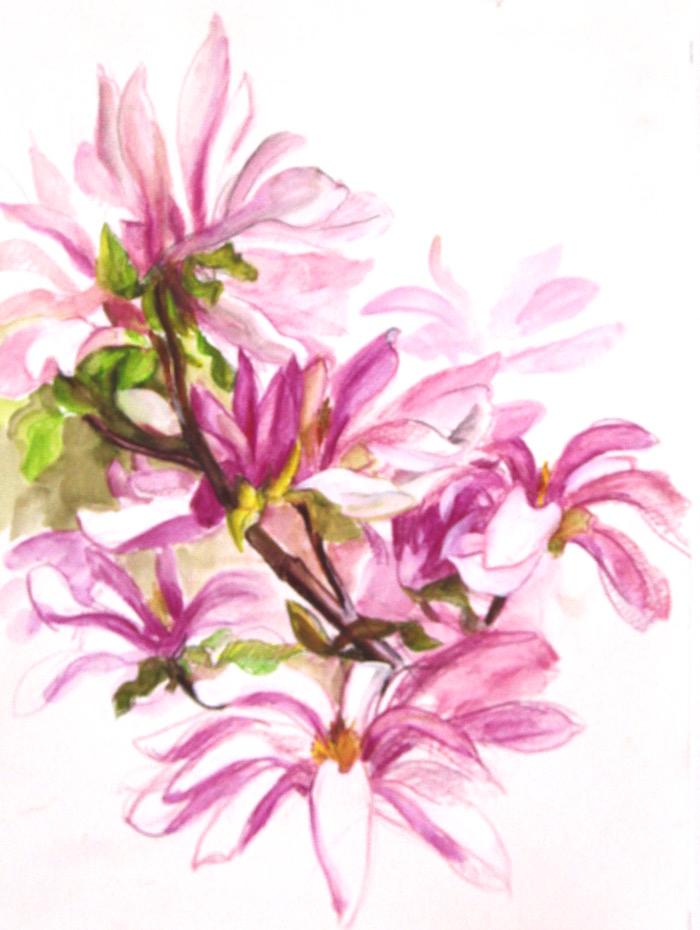 'pinkie' magnolia web